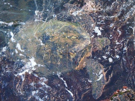 Mana Kai Maui : Turtle off rocks