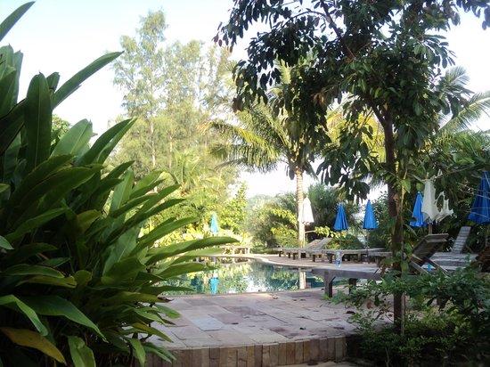 Malibu Beach Bungalows: Бассейн в саду