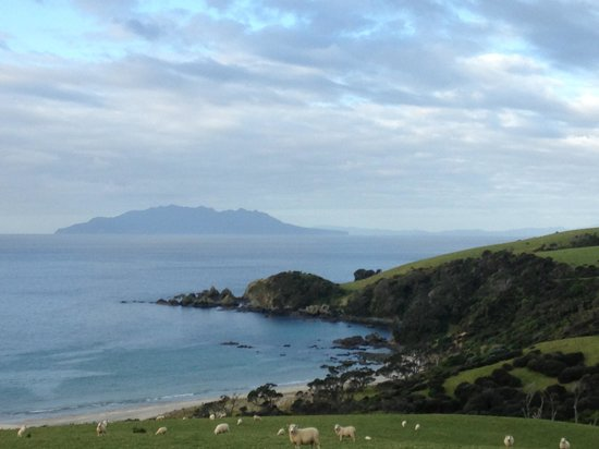 Matakana Country Lodge : Sheep and a View