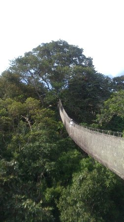 Amazon Explorama Lodges: The Canopy Walkway.  My wife was fine.  I was happy to go up and happy to come down!