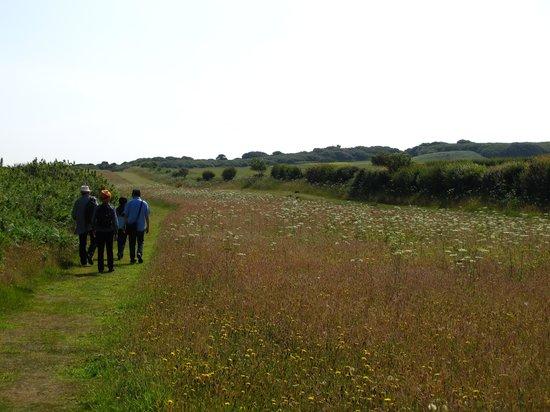 Old Harry Rocks: the walk