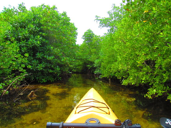Omah Alchy Cottages: Mangrove forest by canoe