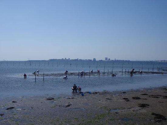 Funabashi, Japan: 潮干狩りのシーズンには多くの人で賑わいます