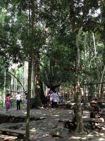 Sanya Li and Miao Village: 100 year old Kapok tree at Li and Miao village