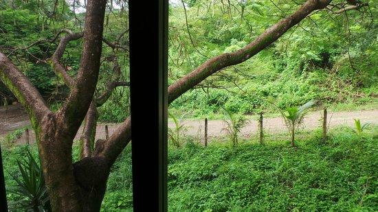 Hotel Belvedere - Playa Samara: Boom vol leven naast de kamers