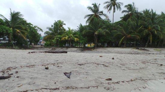 Samara Beach: Beetje rommelig door natuurlijk afval