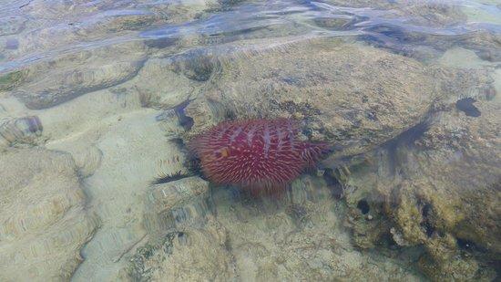 coralli e super riccio