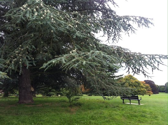 Nonsuch park - Picture of Whitehall, Sutton - TripAdvisor