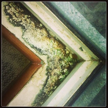 Kiulap Plaza Hotel : The mold in room 233