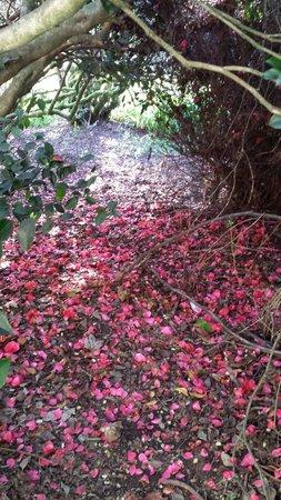 Jardin Botanico de la Universidad Austral de Chile: Hermosa flora del jardín botánico