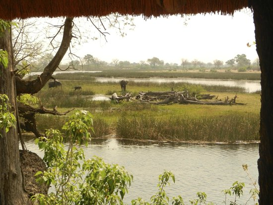 Wilderness Safaris Savuti Camp : Elephants across the channel from our deck
