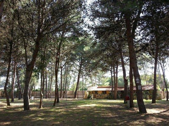 Camping Village Sentinella : La pineta