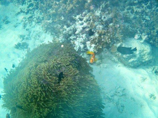 Kuramathi Island Resort: Snorkeling