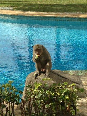 Hilton Bali Resort : devant notre chambre avec accès piscine