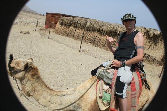Dahab Paradise: Camel safari
