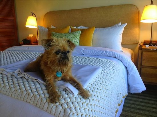 Sea Ranch Lodge: Doggie sheets are provided to cover the bed
