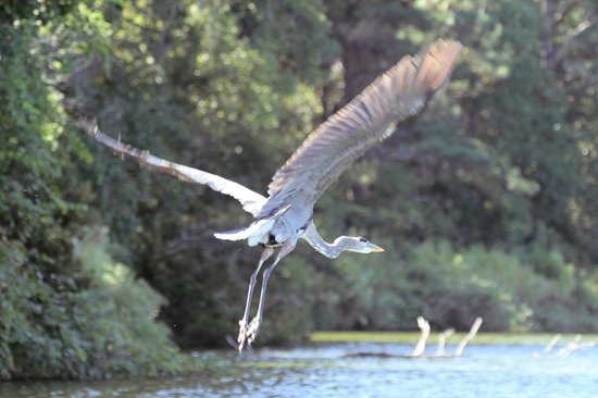 H2O Sports: A heron flying away from the boat