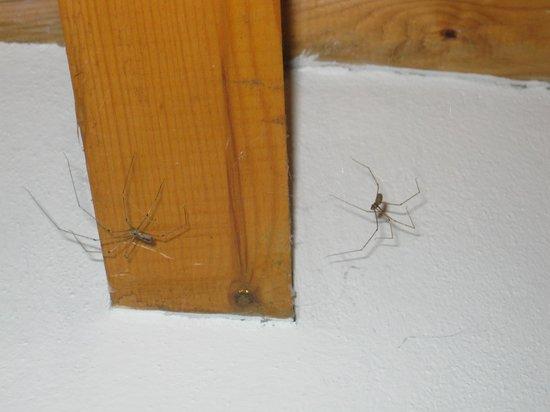 La Regalina: Habitaciones sucias - Arañas