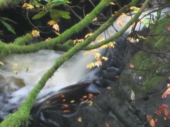 Crarae Garden Argyll: water everywhere