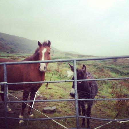 Seamount Farmhouse Bed & Breakfast: Horse & Donkey on nieghbor's farm - super friendly, love petting & chatting