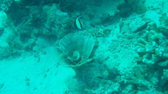 Hippocampe Plongée : Et de nouveaux paysages marins