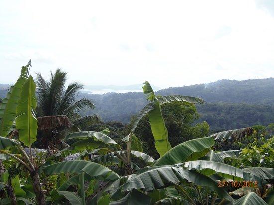 Le Relais Forestier: La vue