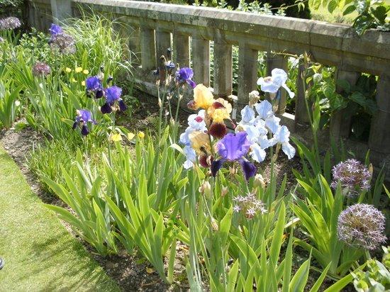 Bodnant Garden: Irises in flower