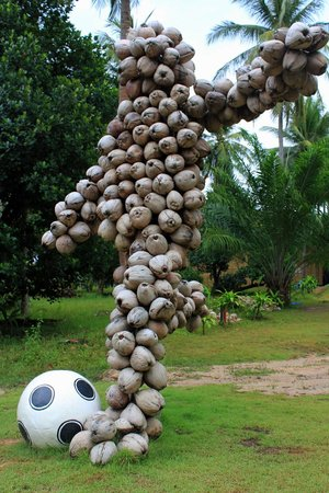 Samui Football Golf Club: The footballer is made of coconuts