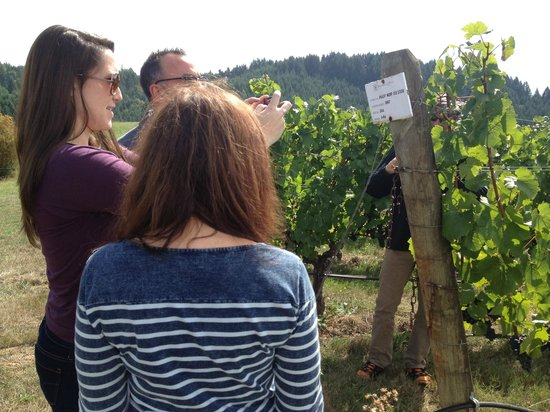 A Nose For Wine Tours : Was able to tie this row of grapes with the wine we were tasting and loving!!