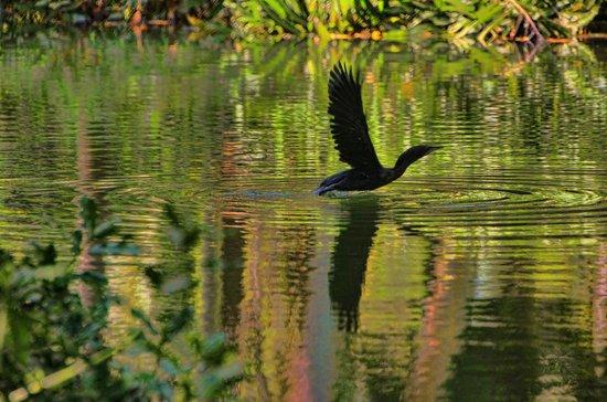 Ashtamudi Villas: Black Swan