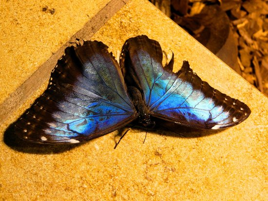 Smithsonian Butterfly Habitat Garden: 1