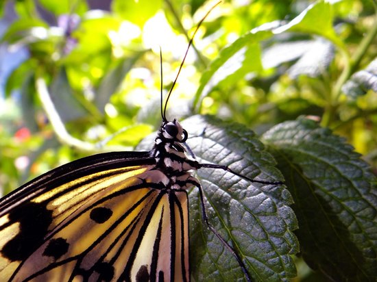 Smithsonian Butterfly Habitat Garden: 5