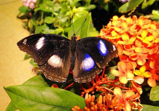 Smithsonian Butterfly Habitat Garden: 4
