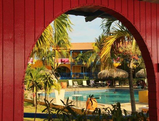 Divi Flamingo Beach Resort and Casino : Divi Flamingo
