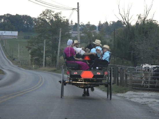 Harvest Drive Family Inn: Amish buggy on the road