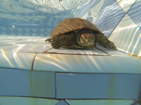 Riad Zahra Mogador : Notre compagnon de piscine!