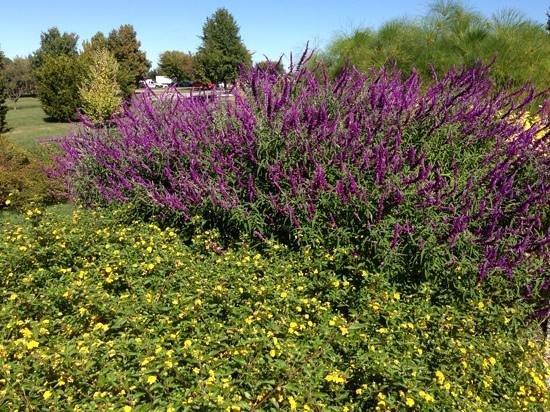 The Arboretum : So colorful