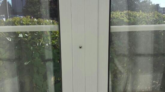Marriott Chicago Midway : 1 of 3 spiders in room!