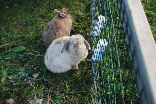 Blue House: Super cute bunnies that love to be petted!