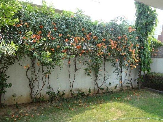 Cinnamon Stays: Photo of the back garden at Cinnamon Nirvana