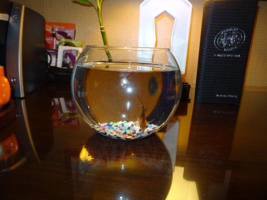 Kimpton Hotel Monaco Denver: Our pet fish while we were there!