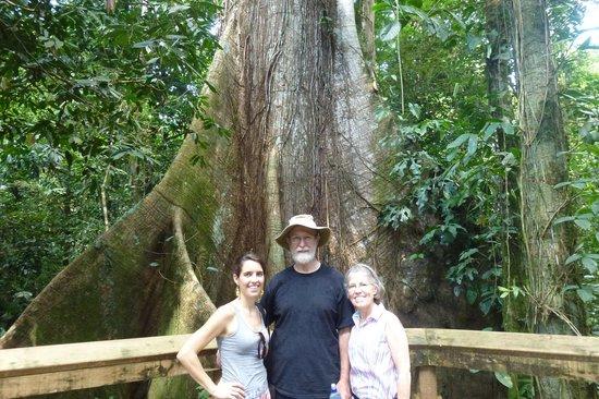 Cinco Ceibas Rainforest Reserve and Adventure Park : the grandaddy of all the ceibas!