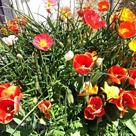Flowers at Floriade