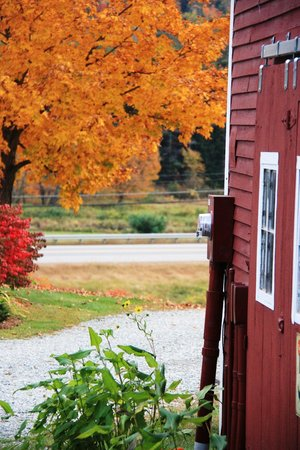 Bishop Farm Bed and Breakfast: Fall Foliage on Bishop Farm