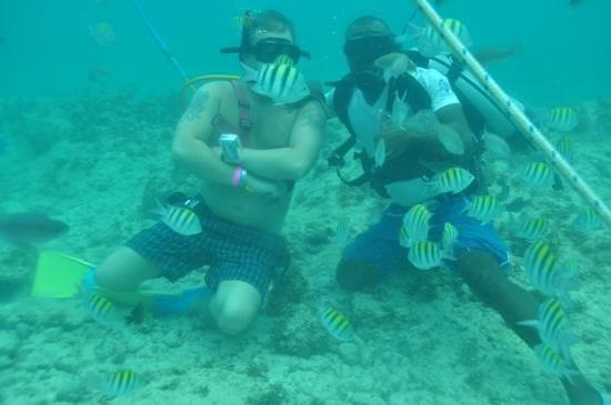Ocean Adventures Bavaro Splash: Great snuba experience thanks Wilkins and the Bavaro Splash crew!