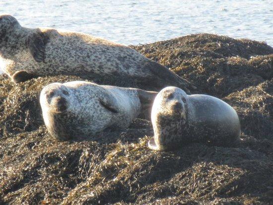 Seafari Cruises: Curious seals