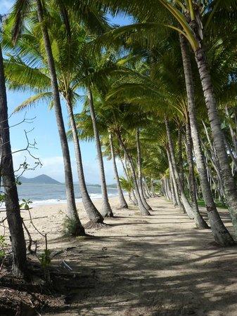 Palm Cove Beach: palm trees