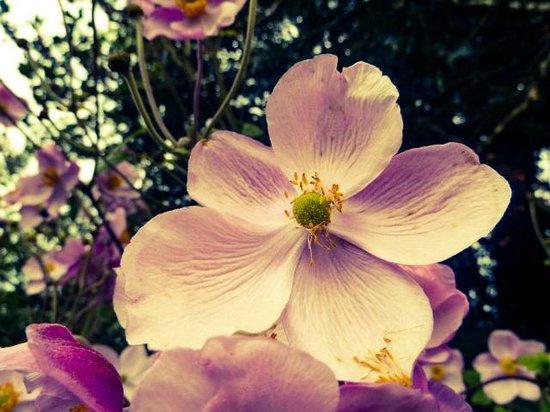 Broughton House & Garden: Flowers in the garden