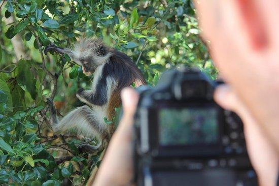 Red Monkey Beach Lodge: Besuch vor der Lodge