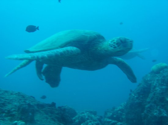 B&B Scuba: Turtles at Red Hill